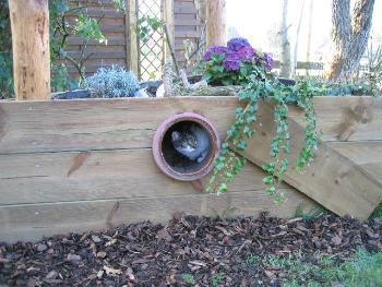 Katzen Garten